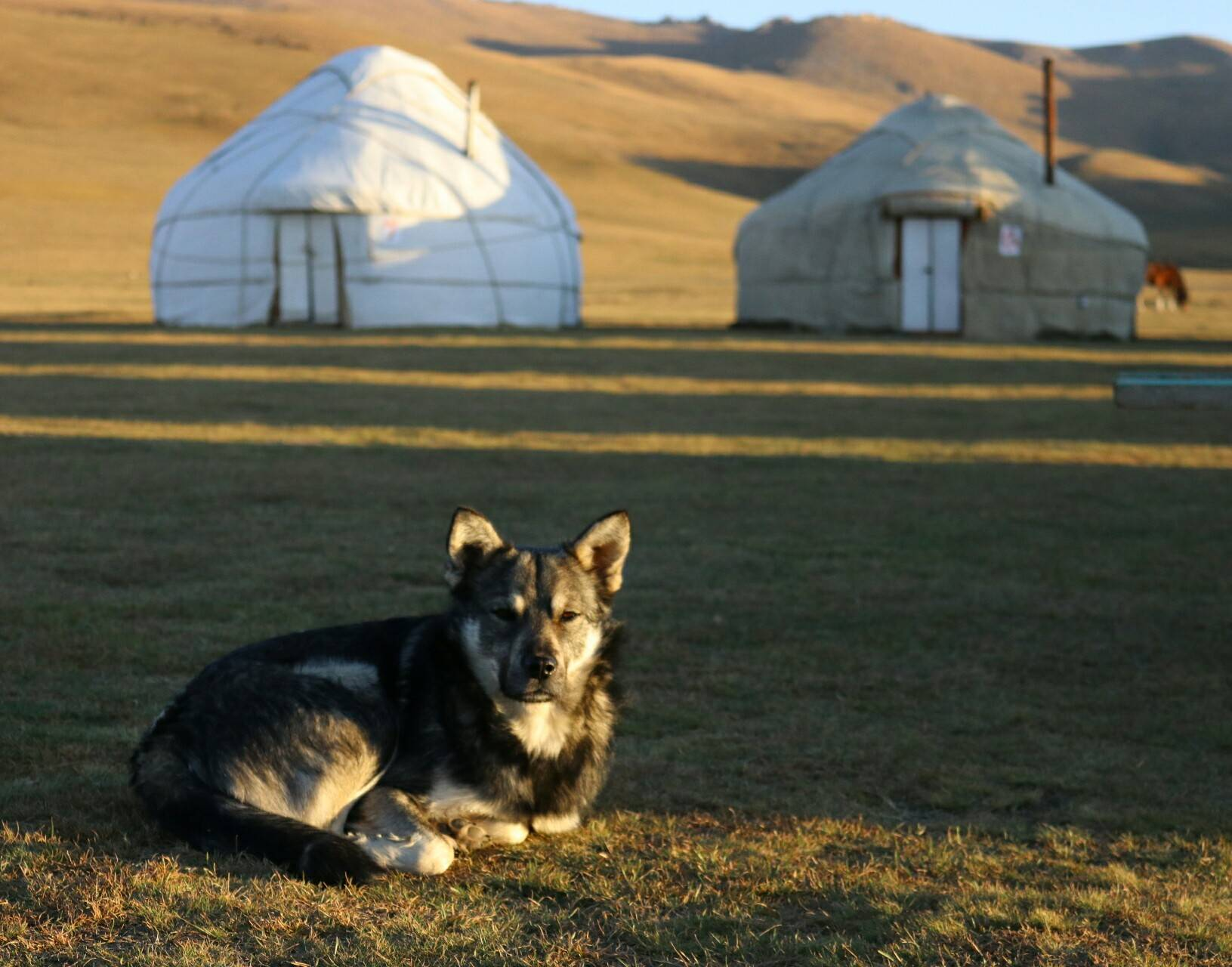 Bayish Yurt Camp
